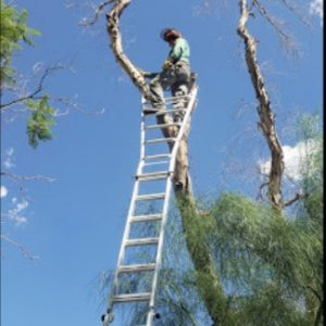 arizona tree trimming