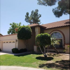 ivy tree service gold canyon
