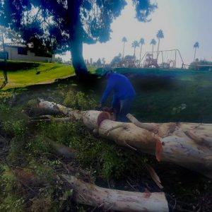 gilbert arizona tree removal