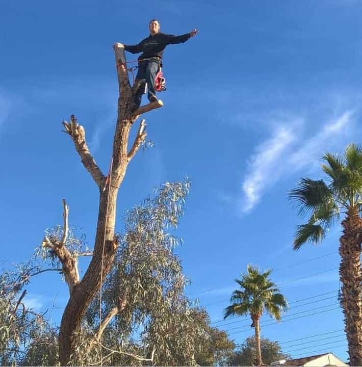 gold canyon tree trimming