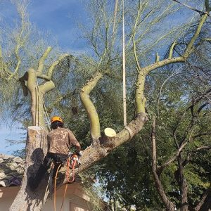 tree cutting service apache junction