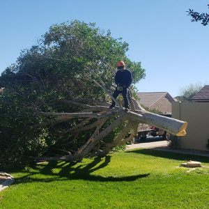 apache junction landscaping service