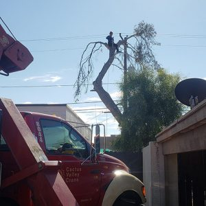 Tree service arizona