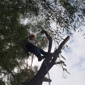 tree service mesa