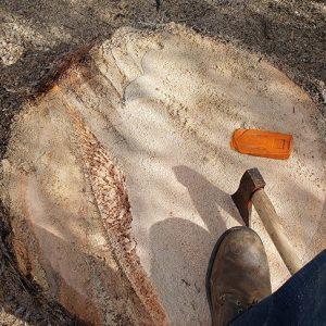 stump removal gold canyon
