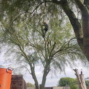 tree service gilbert