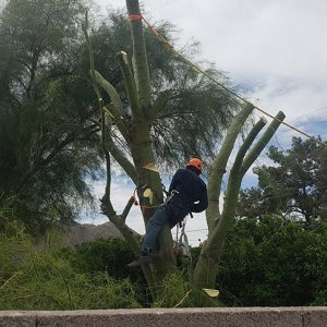 tree service queen valley
