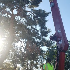 tree service gold canyon