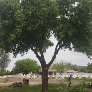 tree service apache junction
