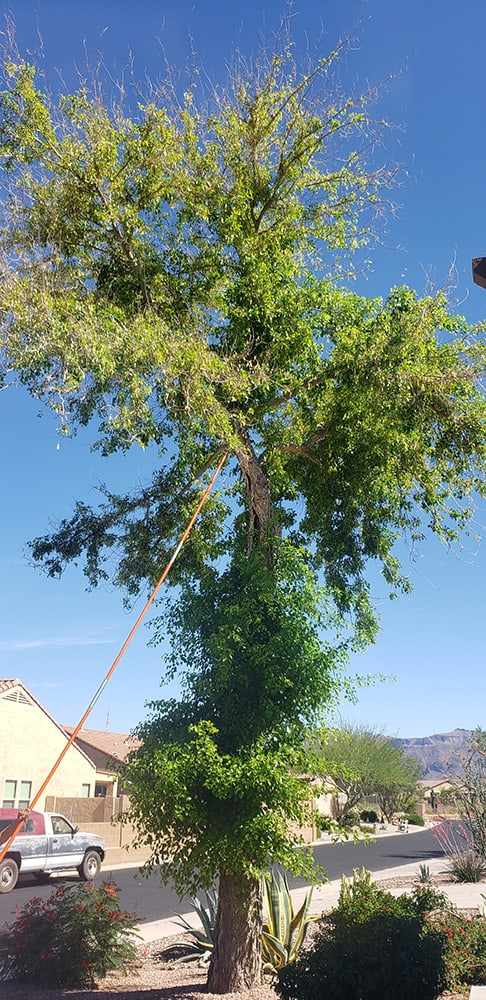 tree removal gilbert az