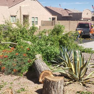 tree removal gold canyon